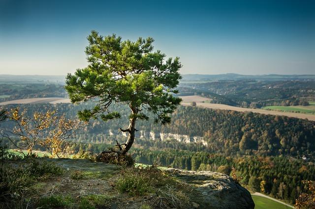Ad un pino