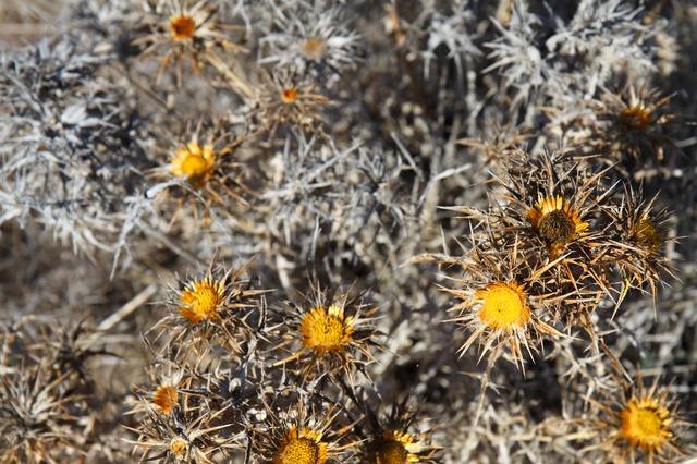 La morte dei fiori