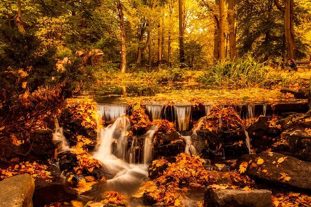 Boschi d'autunno